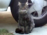 Cat Denton